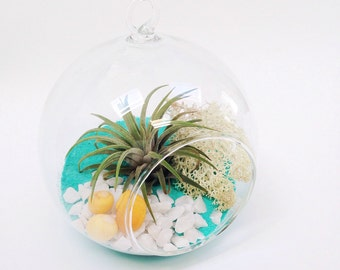 Turquoise Air Plant Terrarium Kit LIMITED EDITION~ Tillandsia colour pop personalise birthday gift decor customise diy present sand