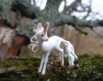 Timid unicorn foal