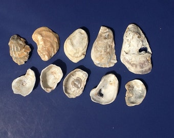 10 oyster shells