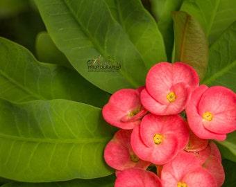 Colour Canvas, Fine Art Photography , Yellow Floral