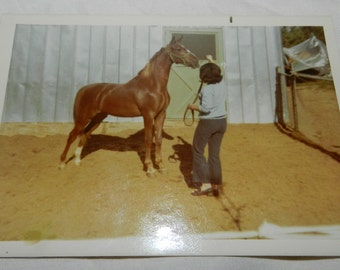 "Professional Race Horse color photograph / polaroid snapshot- Photo of Anacacho's Maid - 3.5"" X 5"" - Art or Craft Supplies               2-2"
