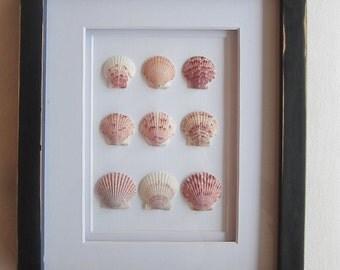 Frame-Wood-Scallop Seashells- Coastal Decor, Beach Decor, Nautical Decor