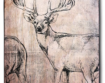 Whitetail Buck Print On Wood 14 5 X 10 5 Hand Colored Red