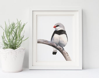 Finch print F185DL, print of watercolor painting finch, black, white and red wall art, printable finch, downloadable bird print