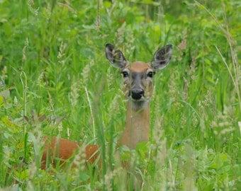 Deer Hiding in the brush