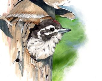 Baby Woodpecker