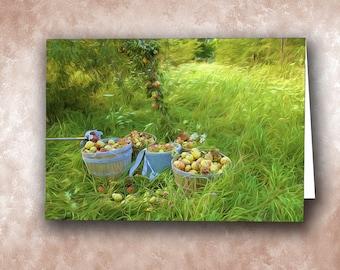 Picking Pears. Lake Champlain Islands, Grand Isle, Vermont