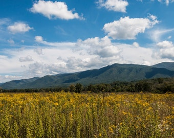 Cades Cove Wildflowers - Canvas