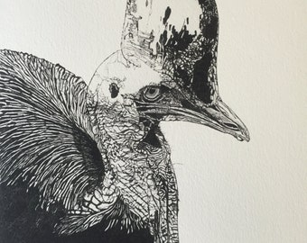 Save The Cassowary - Print