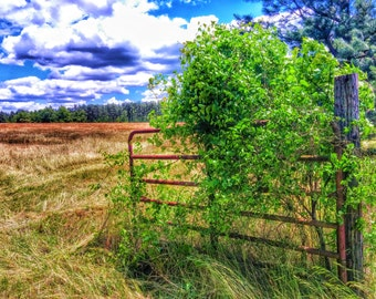 Country Gate Photograph