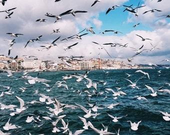 Istanbul Photography, Istanbul, Bosphorus, seagulls,sea, Turkey