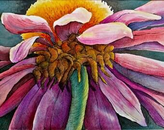 Echinacea Down Under