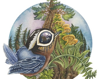 """Nuthatch 6"""" x 6"""" Vinyl Sticker from Original Watercolour Paintings. nature fantasy bird tree forest fern mushrooms eye reflection detail"""