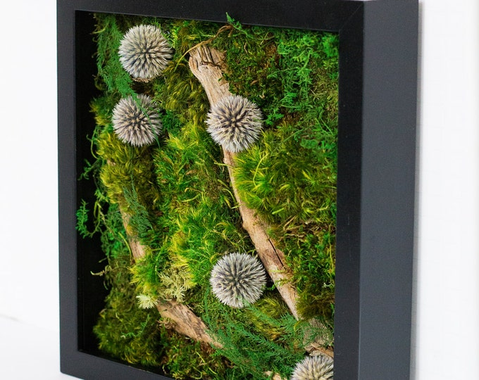 "Moss Wall Art ~ Moss Art Work ~ REAL Preserved Moss ~ No Maintenance Required ~ 10""x10"" ~ ""Spherical"""