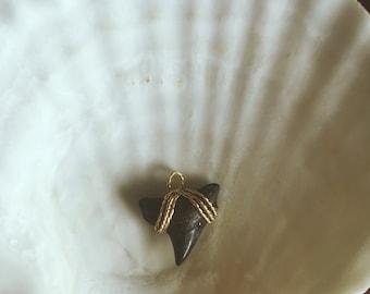 Bull shark tooth pendant