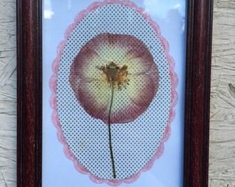 Pink Poppy / Cherry Frame