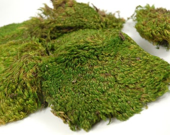 4 sq. ft. Sheet Moss Perfect for terrarium vivarium landscape fairy garden etc