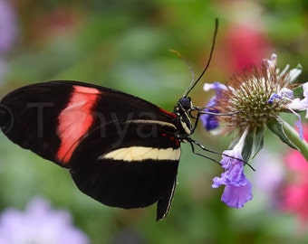Butterfly, Nature photo, wall art, wall decor, wildlife, nursery decor, office decor, home decor, picture