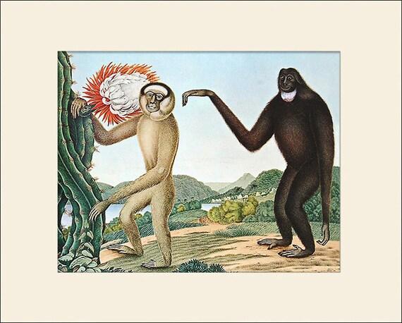Hoolock Gibbon Print, Aloys Zötl, Art Print with Mat, Antique Natural History Illustration, Wall Art, Vintage Wall Decor, Animal Print