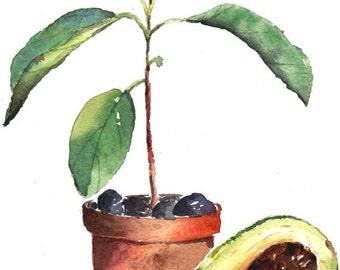 Avocado Picture,avocado picture,avocado watercolor,wall decor,painting,avocados,fruit,pattern,plant,avocado tree,botany, art avocado