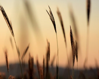 Sunset grass silhouette