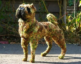 Breed of dogs any, from a grass and moss