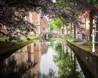 Delft Canal and Flowering Tree v1