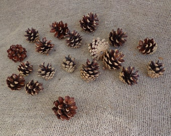 20 Medium Pine Cones, Wedding Pine Cones, Pine Cone Wreathes, Natural Pinecones, Pine Cone Supply, Real Nature, Gifts of Nature