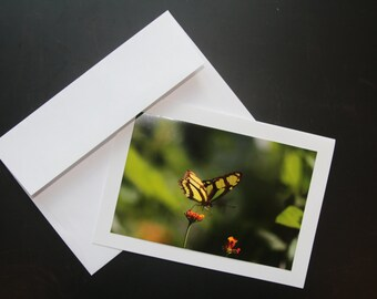 Photo Greeting Card-Butterfly from Costa Rica-Blank Card