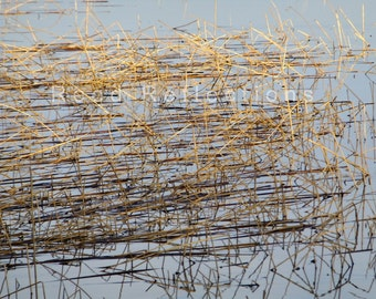 Reed Reflections #9