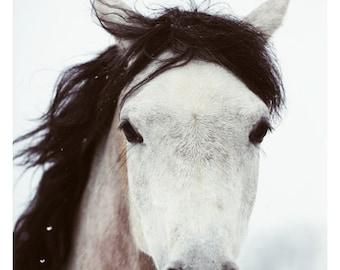 Horse Photograph - Nature Photography - Winter Horse - Horse Art - Equestrian - Modern Art - Alicia Bock - Oversize Art - Animal - Winter