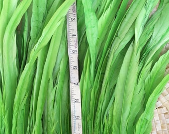 Lime green  feathers in 12 to 14 inch length-rooster tail feathers, Tahitian dance costume supply