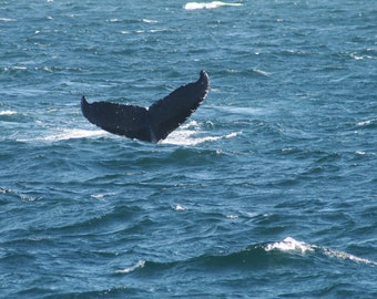 Humback whale digital download image free use