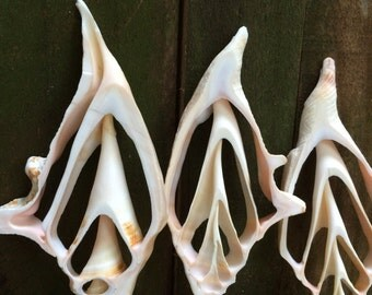 SUPPLIES...sliced shell pendants - conch beach natural wedding - sea life - accessories - jewelry supplies
