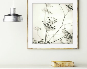 "Black and white botanical -  fine art photography - minimal white large wall art - fennel plant 8x8 20x20 ""Natures Drawing"""