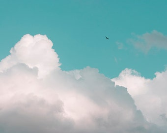 Cloud Photography, Nature Art, Bird in Flight, Cloud Art Print, Nursery Wall Decor, Landscape Photography, Summer, Teal, White Clouds - Soar