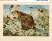 PRINT SALE 20% OFF Vintage 1926 North American Animals  Original Bookplate Illustration, Print, the Beaver,  Woodland Animals, Natural Habit