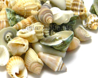 Lot of 100 Assorted Small Whole Shell Seashell Charms and Beads with Drilled Holes