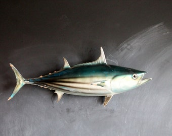 Antique Skipjack Tuna Wall Piece, Vintage Nautical Skip Jack Fish Taxidermy for Beach House Decor