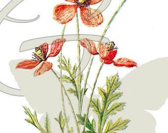 Flower Scrapbooking Digital Download Illustration Clip Art Botanical Art Wildflower Poppy
