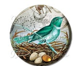 """50% OFF - Pocket Mirror, Magnet or Pinback Button - Wedding Favors, Party themes - 2.25""""- Bird with Golden Egg MR153"""