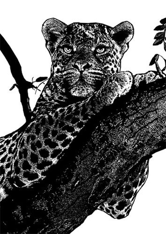 female leopard in tree clipart png clip art cats Digital Image Download jungle animal art graphics digi stamp digital stamp black and white