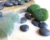Zen Garden Starter Kit 5 Faux Moss Rocks and 8 ounces of Black Polished Stones