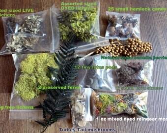 Woodland terrarium supplies 10 assorted kinds-cones-reindeer moss-preserved fern-Canella-Lava rocks