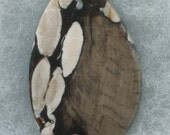 Petrified Peanut Wood Designer Cabochon from Australia