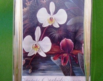 Orchids in Southern Florida Flower Calendar Painting Large Rectangle Glass Paperweight