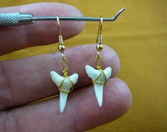 5/8 inch white Modern Mako Shortfin Shark Lower Tooth Teeth dangle earrings gold wired JEWELRY S812-2