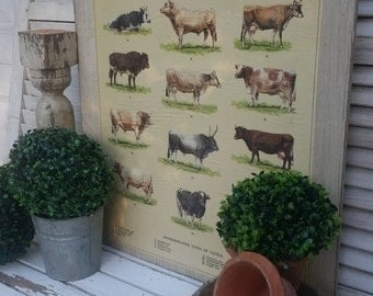 SHOP HOP DEAL Large Beef and Dairy Breed Cow board