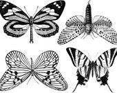 CONE 6 Large Butterflies Ceramic Decals, Waterslide Decals, Ceramic Transfers