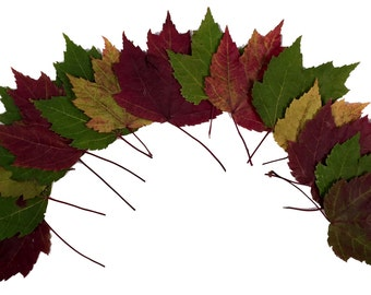 SALE, 12 Real Pressed Variegated Red Maple Leaves, Unique Deep Red, Maroon, Green Variegations, Thanksgiving Table Decor, Biodegradable